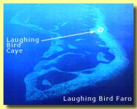 Laughing Bird Faro Aerial